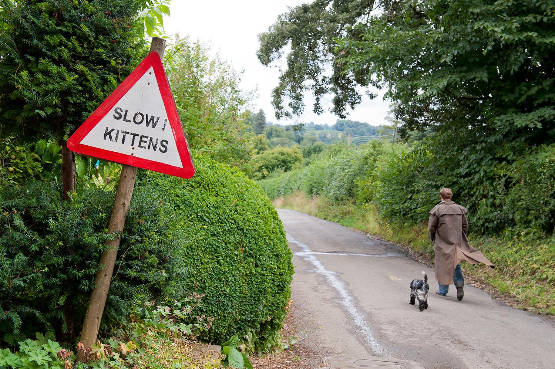 slow-kittens.jpg