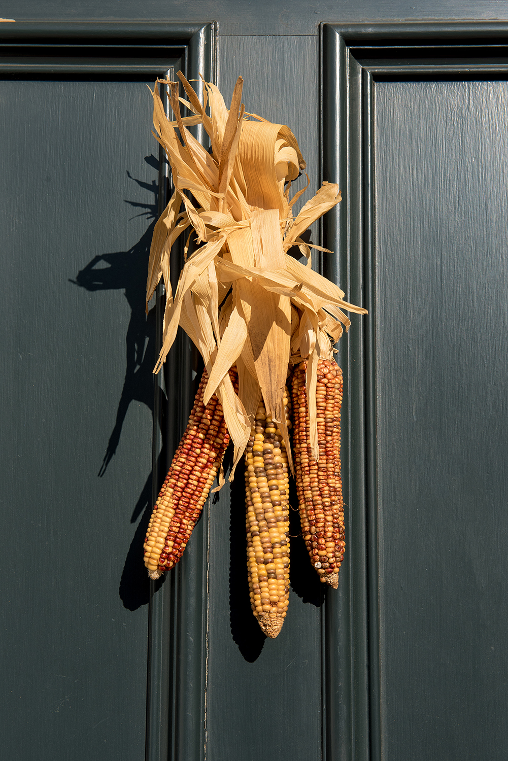 Corn cob decorations on a front door in Georgetown, Washington, DC.