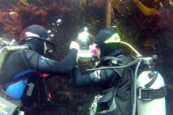 Divers installing webcam.