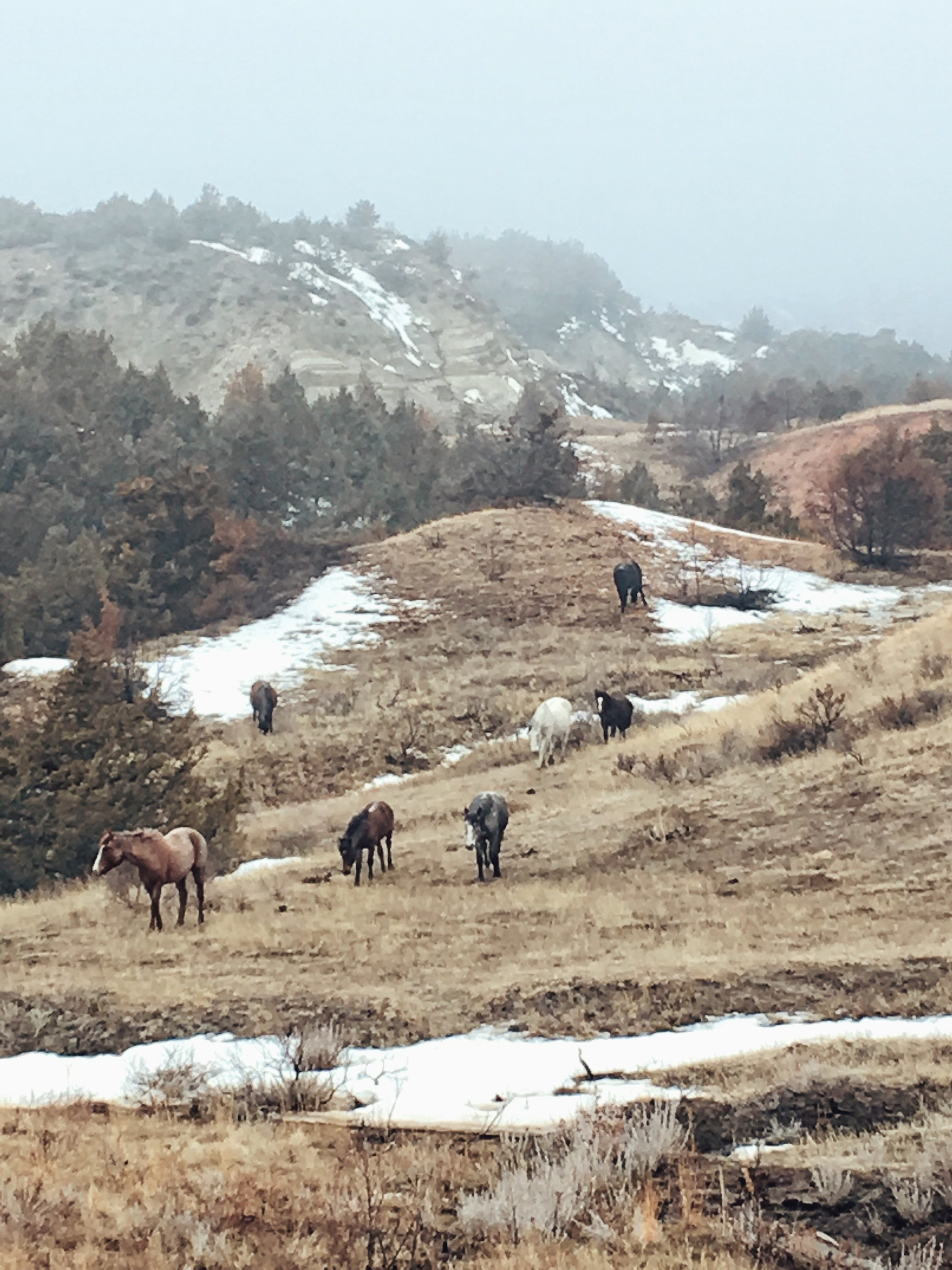 Wild Horses, Theodore Roosevelt National Park, ND