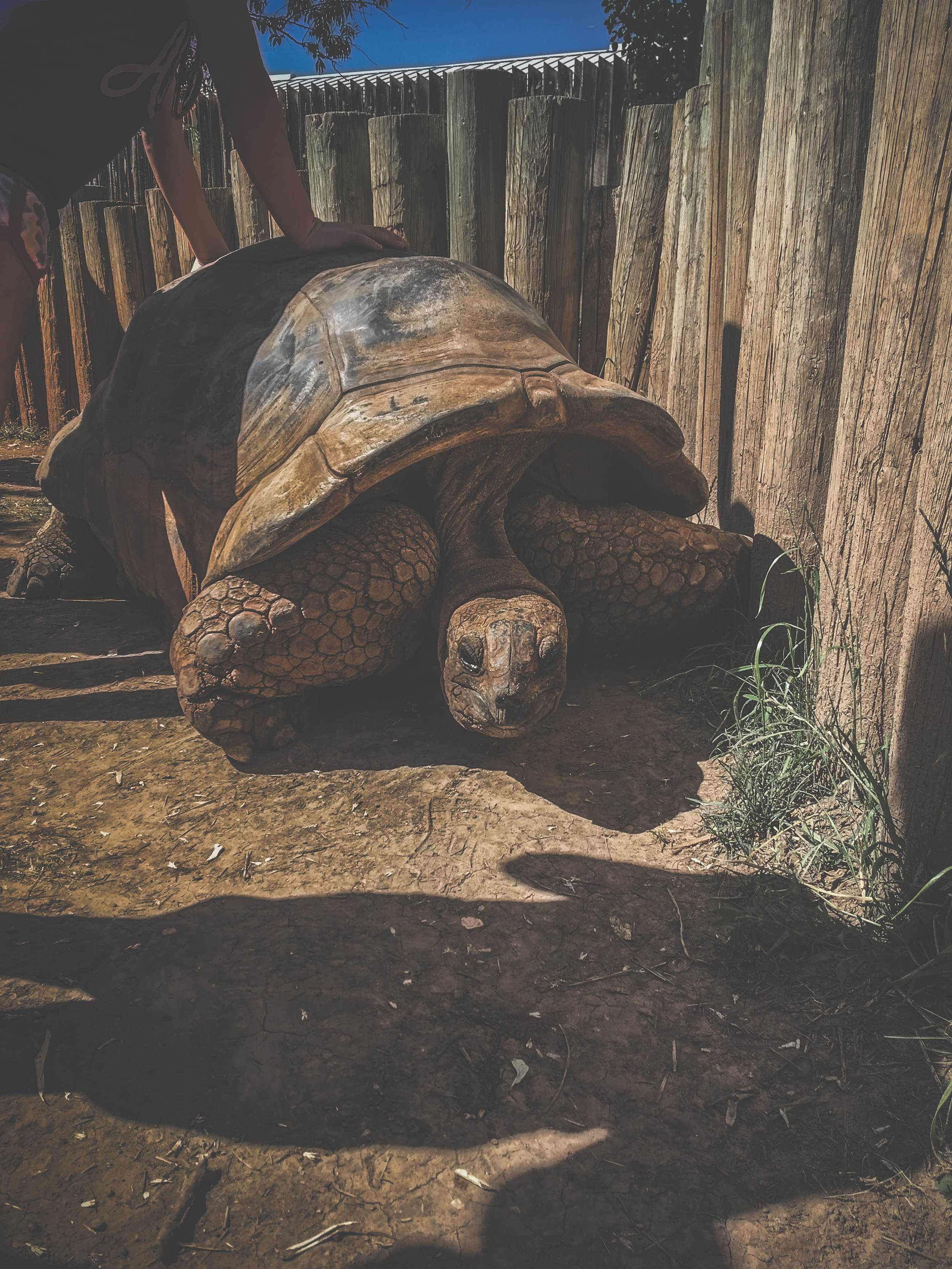 Orville, 114 years (Reptile Gardens, SD)