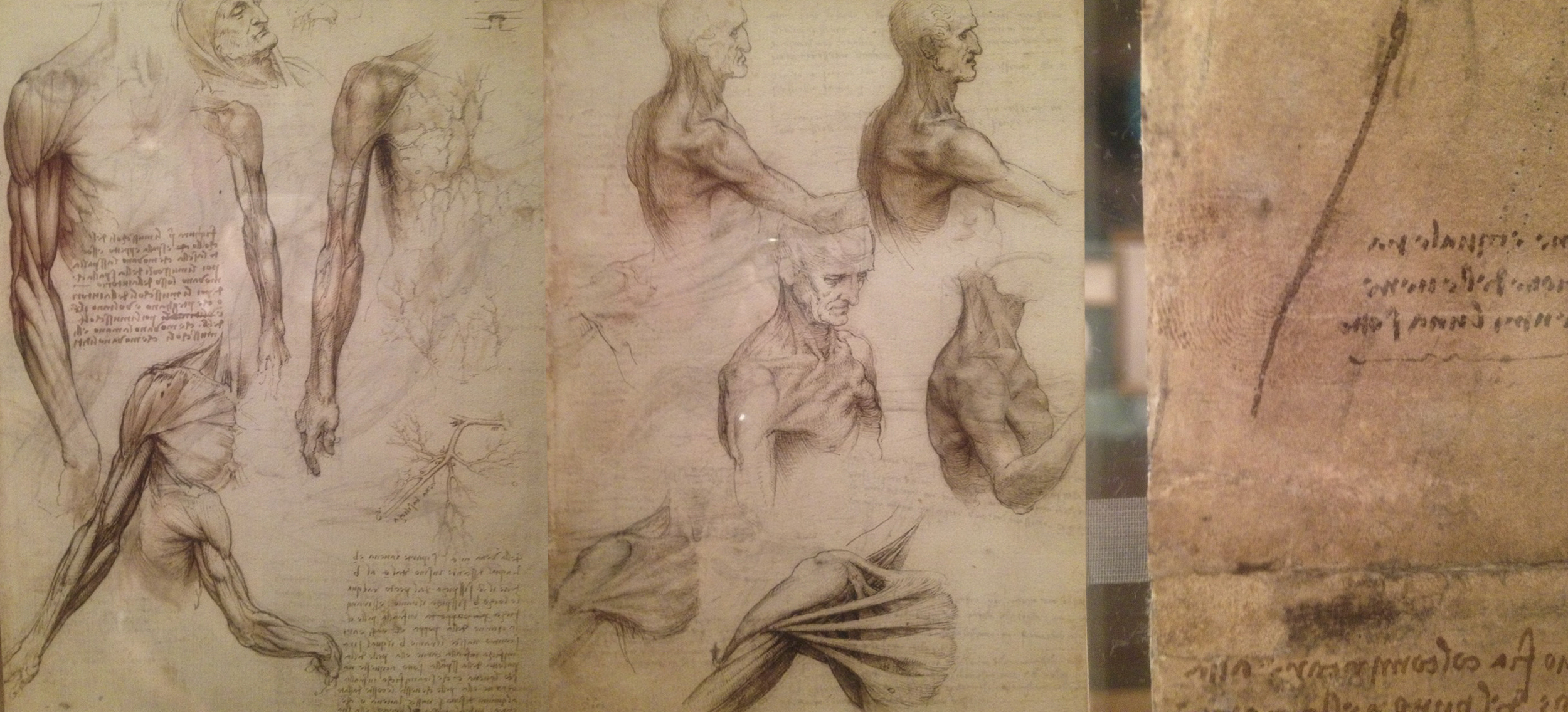 Da Vinci's sketches of the human form, on the right of the image you can see Da Vinci's fingerprint along with the the pin-pricks used to make copies of his drawings (click image to enlarge)