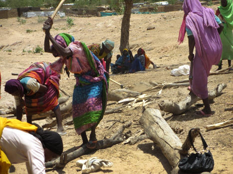 """Women chopping wood at firewood distribution location in Farchana. """"Because of ration cuts, women have to cut wood in the areas outside the camp, where they can be sexually assaulted,"""" one refugee said."""