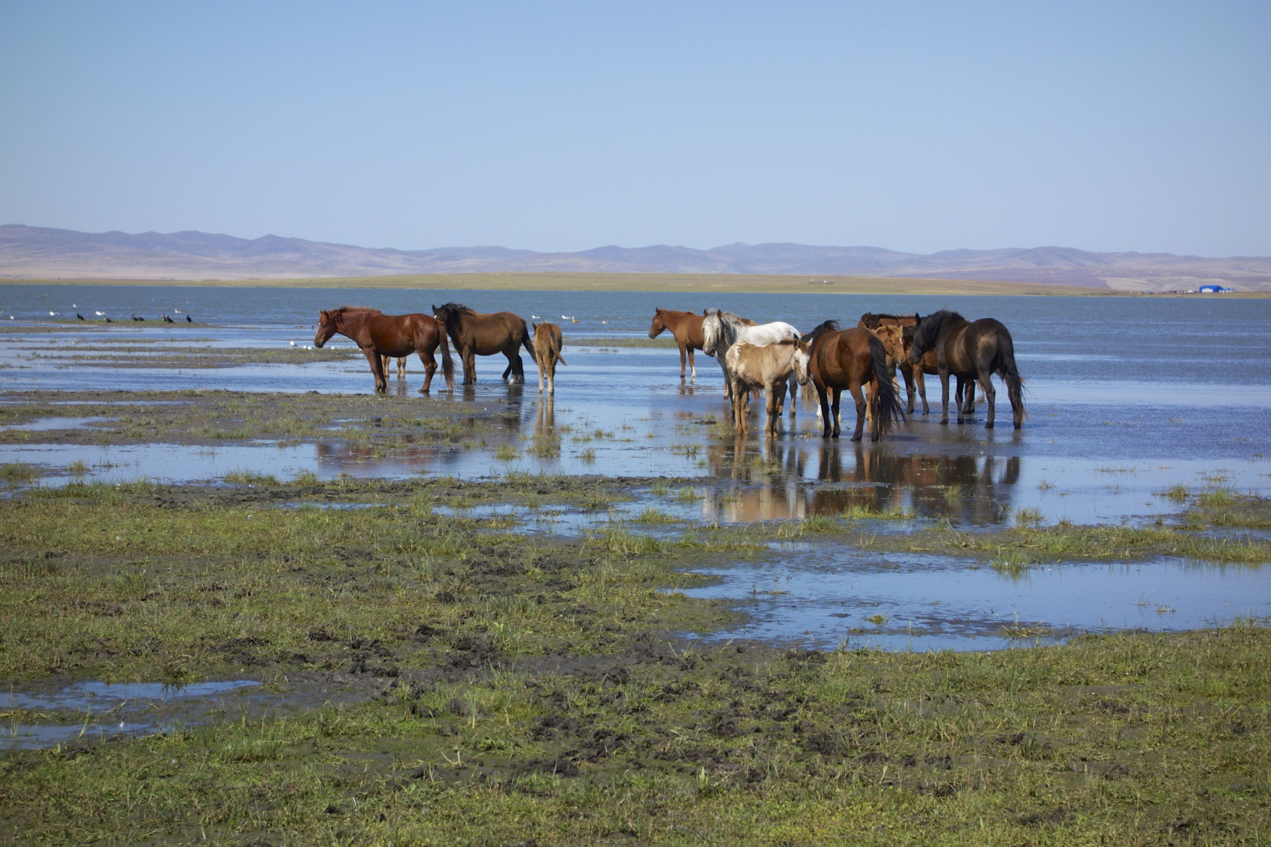 Mongolian grasslands and swamps.