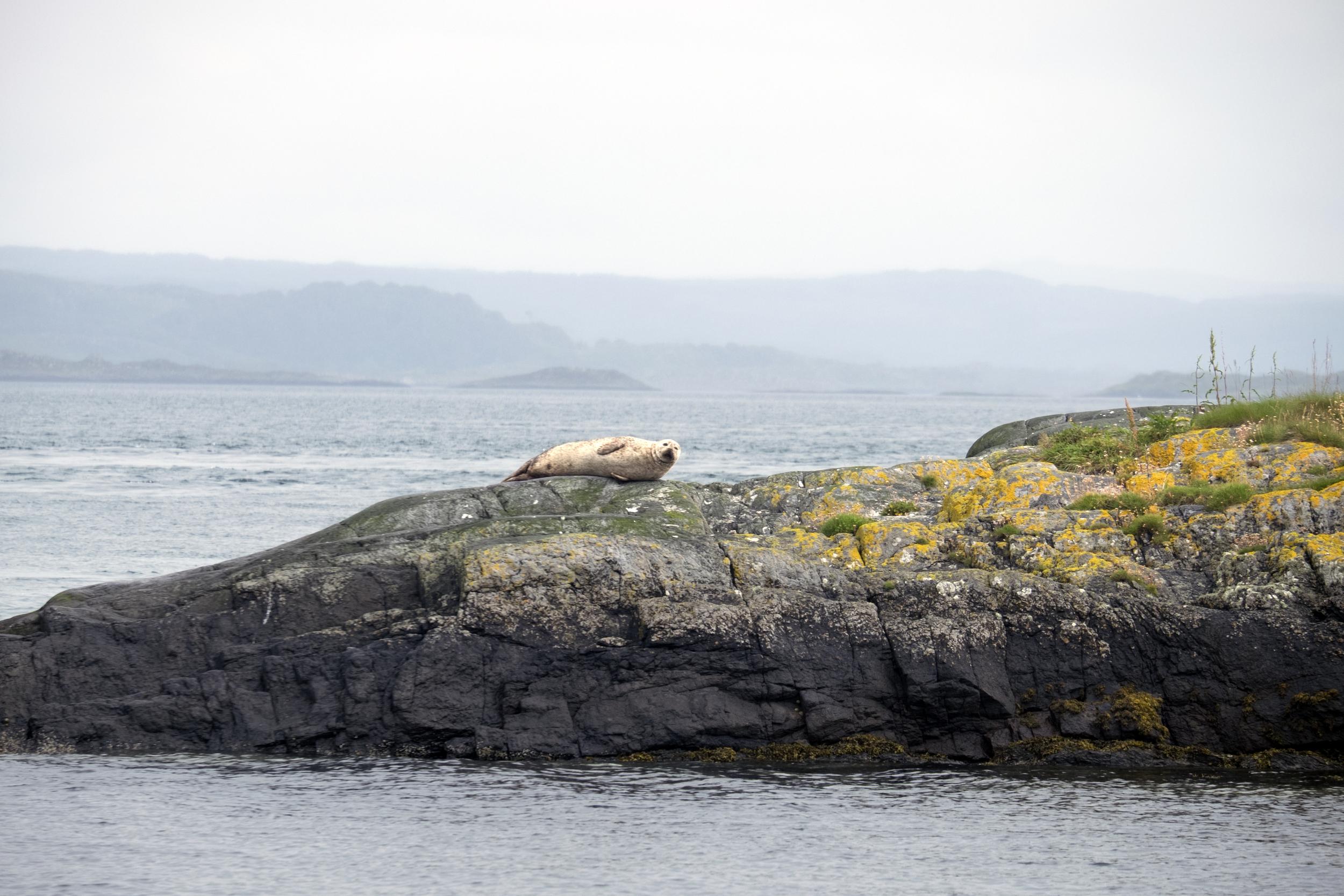 20150727 Seal on the rocks (1).jpg