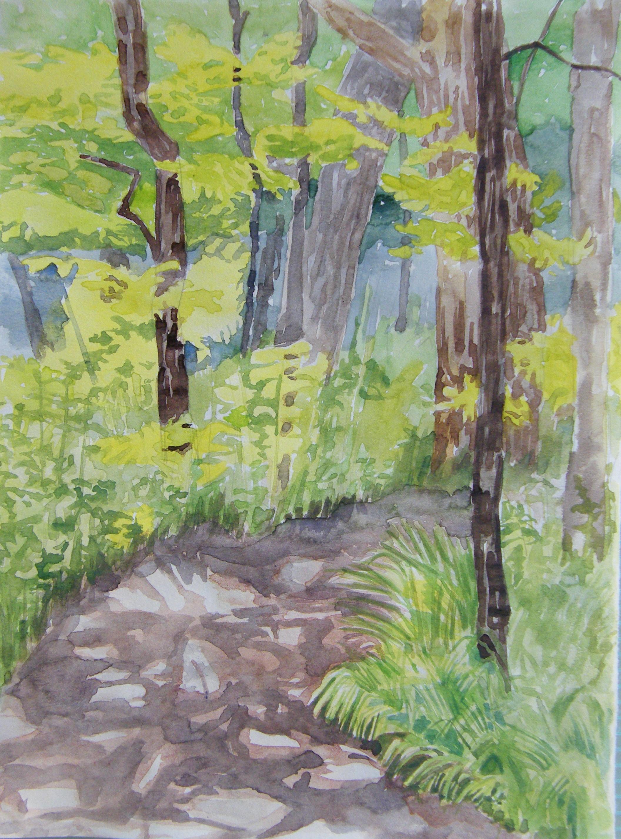 woods next to Cub Creek