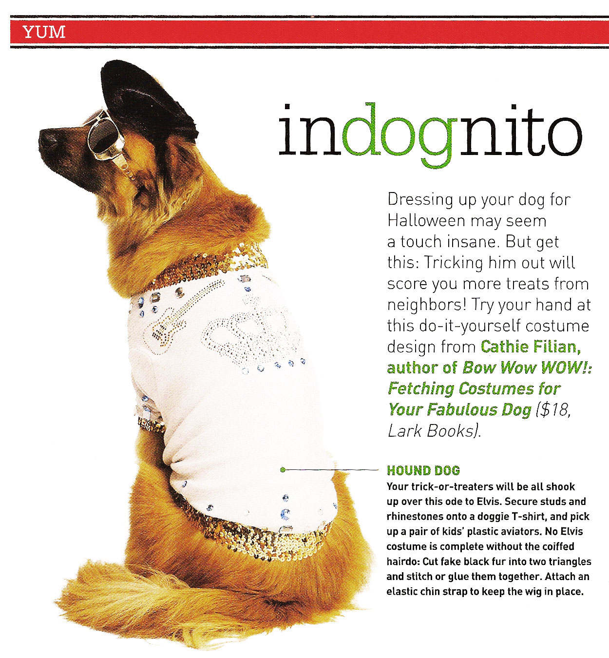 Pet Costume // Everyday with Rachael Ray