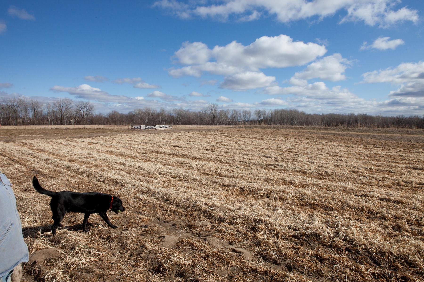 """Farm Dog near """"Chicken Tractors"""""""
