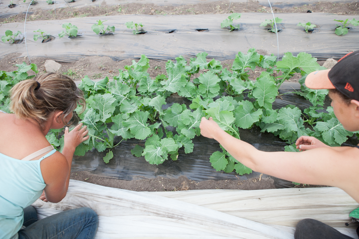 Looking for Aphids on the Kale