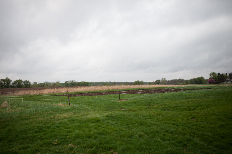 Ex-Onion Field in Fallow