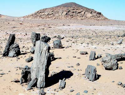 Broken pieces of fossilised tree trunks. Image courtesy of  Temehu   http://www.temehu.com/Cities_sites/sahara- fossilised-forest.htm