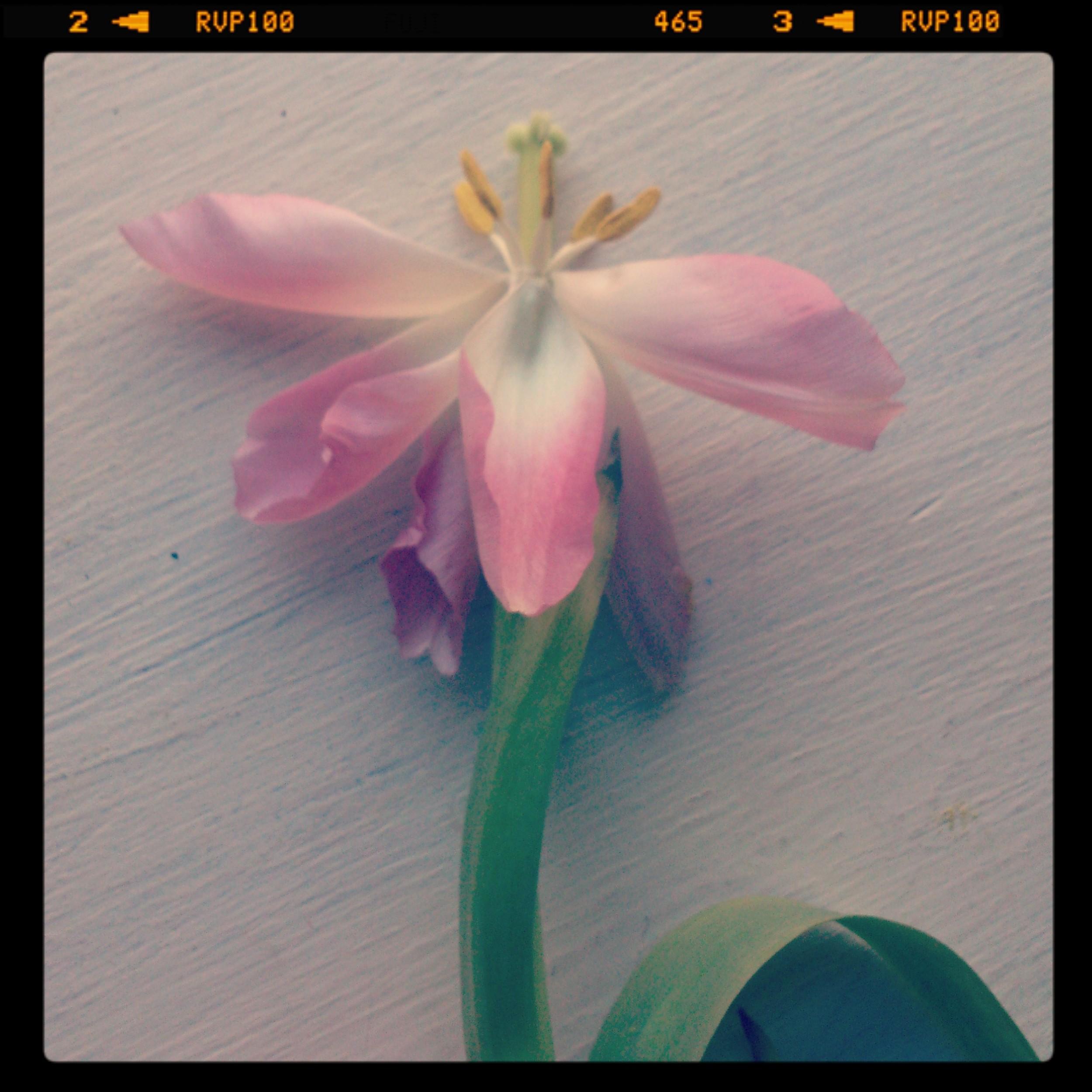 jade mellor christopher kane flower tulip bottany.jpg