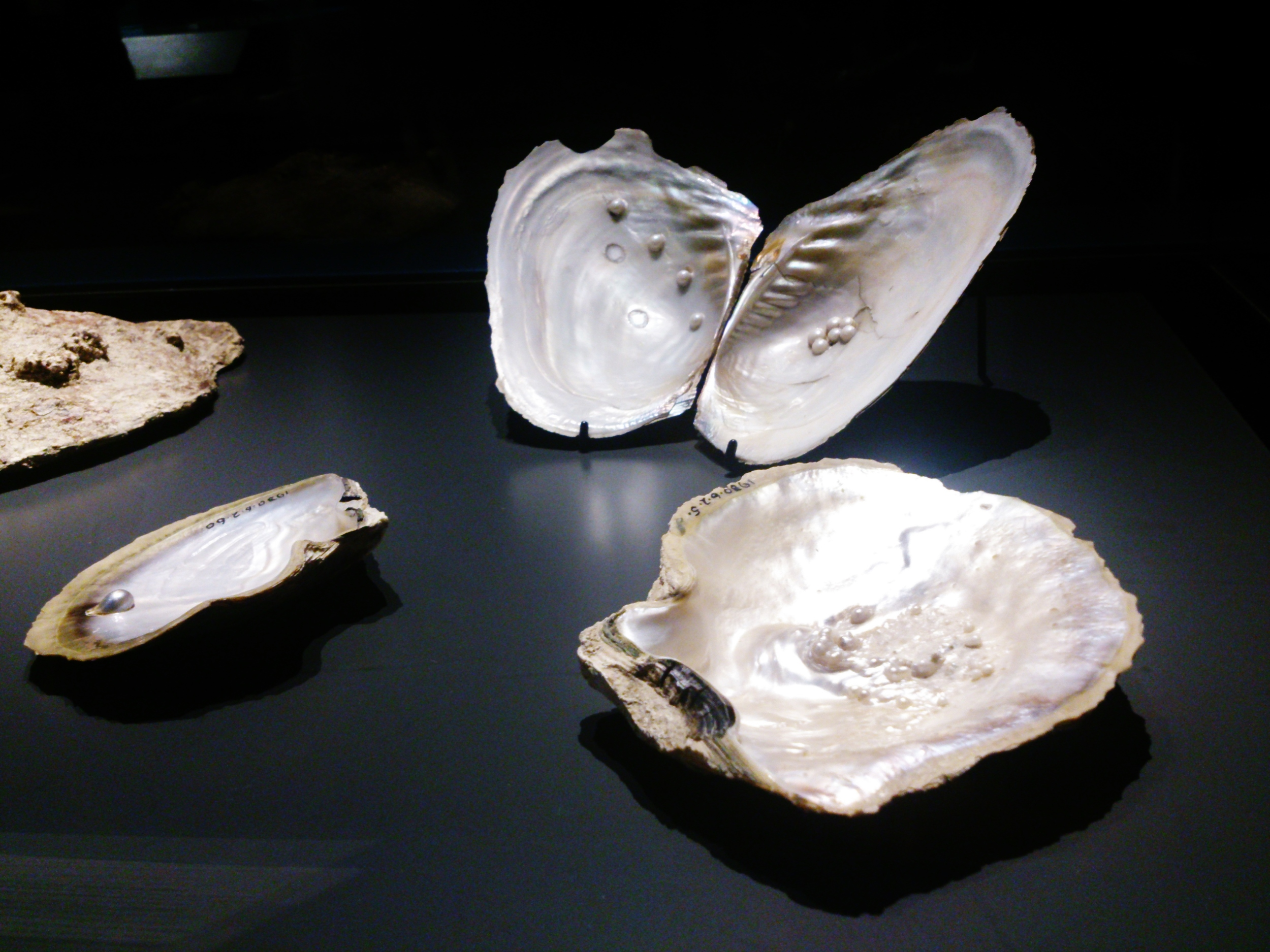 Pearls at The Museum of London