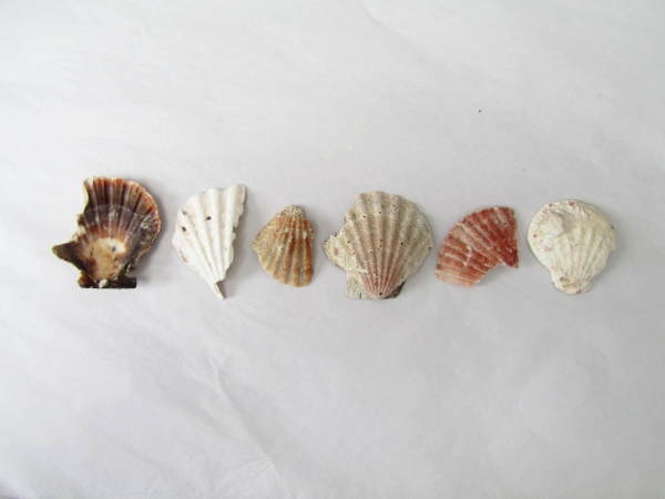 jade mellor shells.JPG