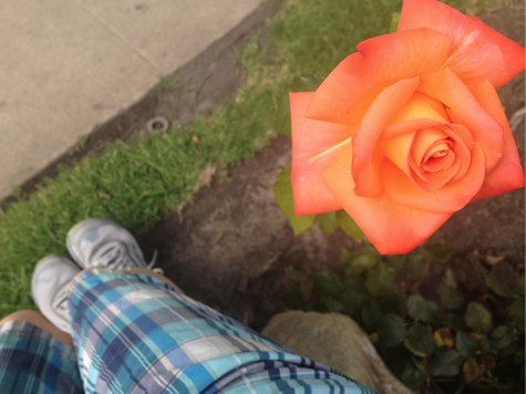 bloggy-sitting-by-a-rose.jpg
