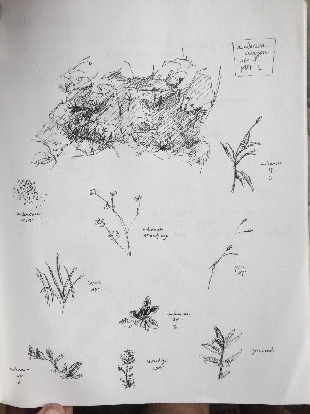 Sketches of survey plots by the wonderful Hannah Perrine Mode.