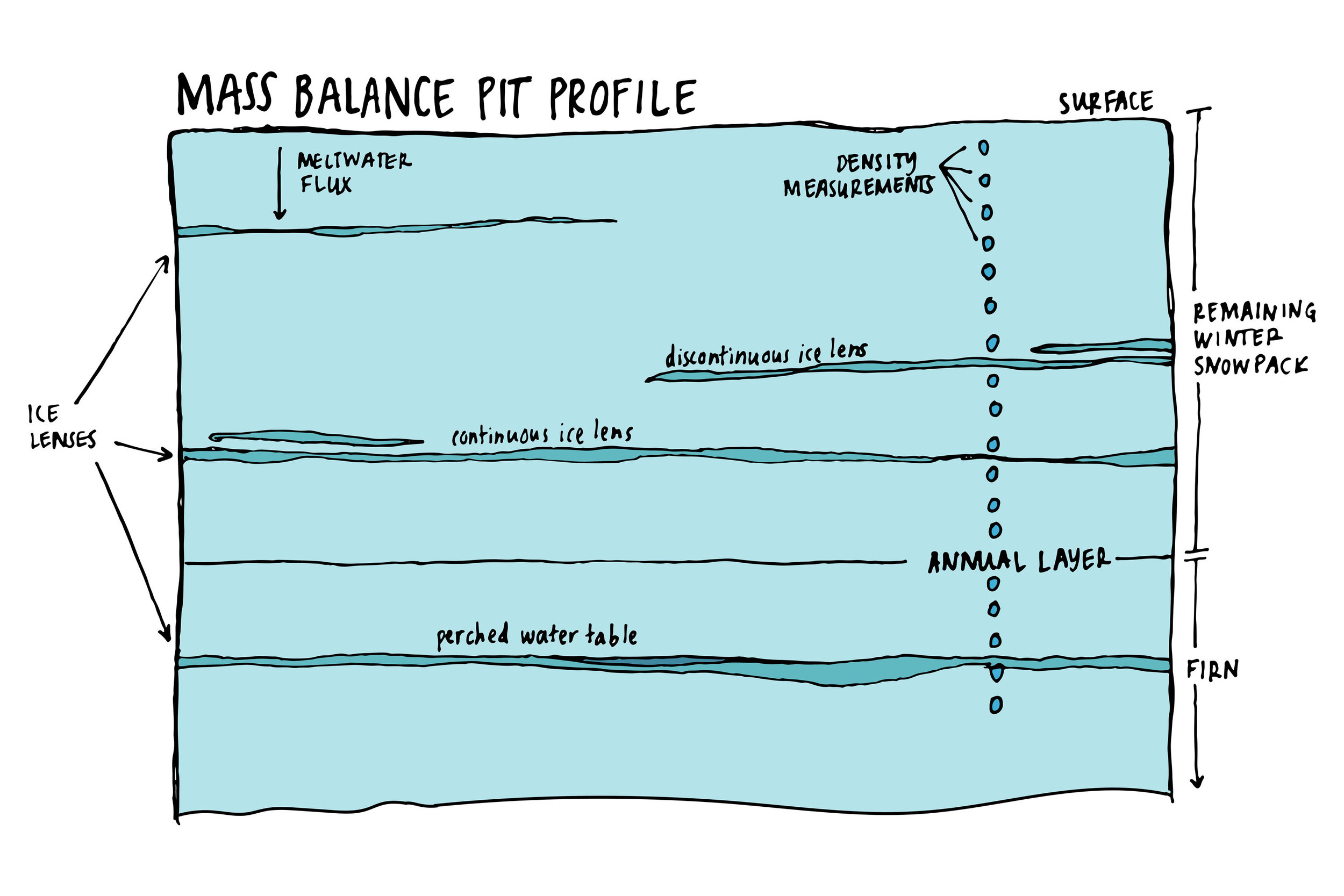 Illustration of the sampling wall of a mass balance snow pit on the Juneau Icefield. Image credit: Mia Vanderwilt.