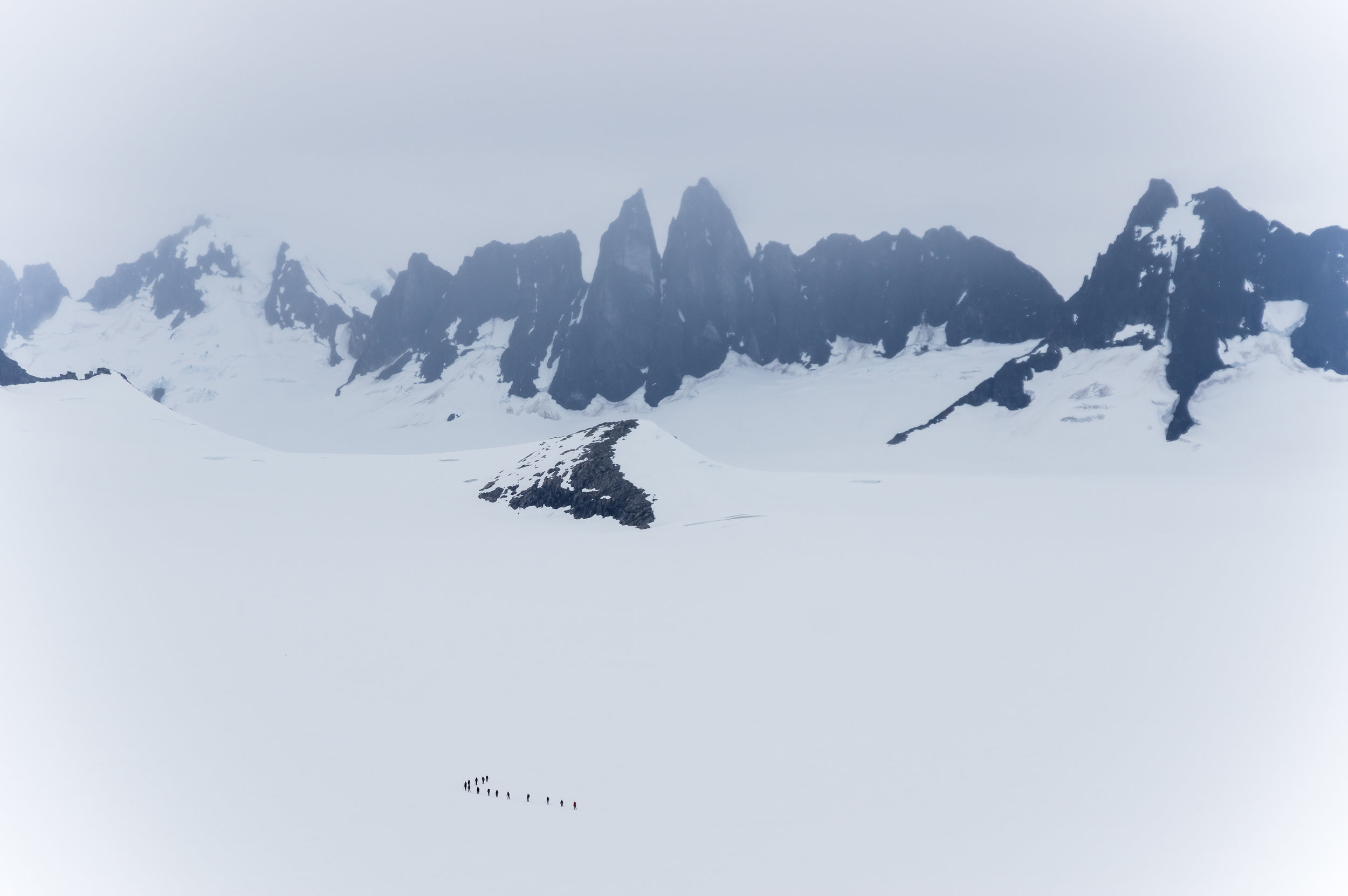 Two rope teams wind their way home between crevasses after a day of field work in the middle of Taku Glacier. Photo: Daniel Otto.