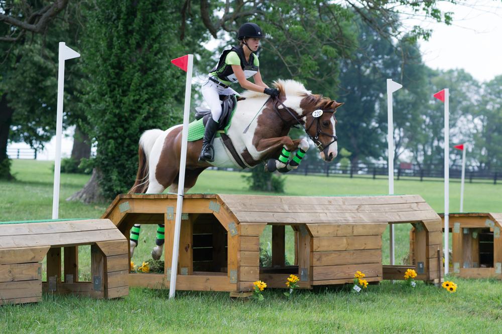 Hidden_gem_pinto_eventing_KY_horses_jumper_jewell_nikki_tigger.jpg
