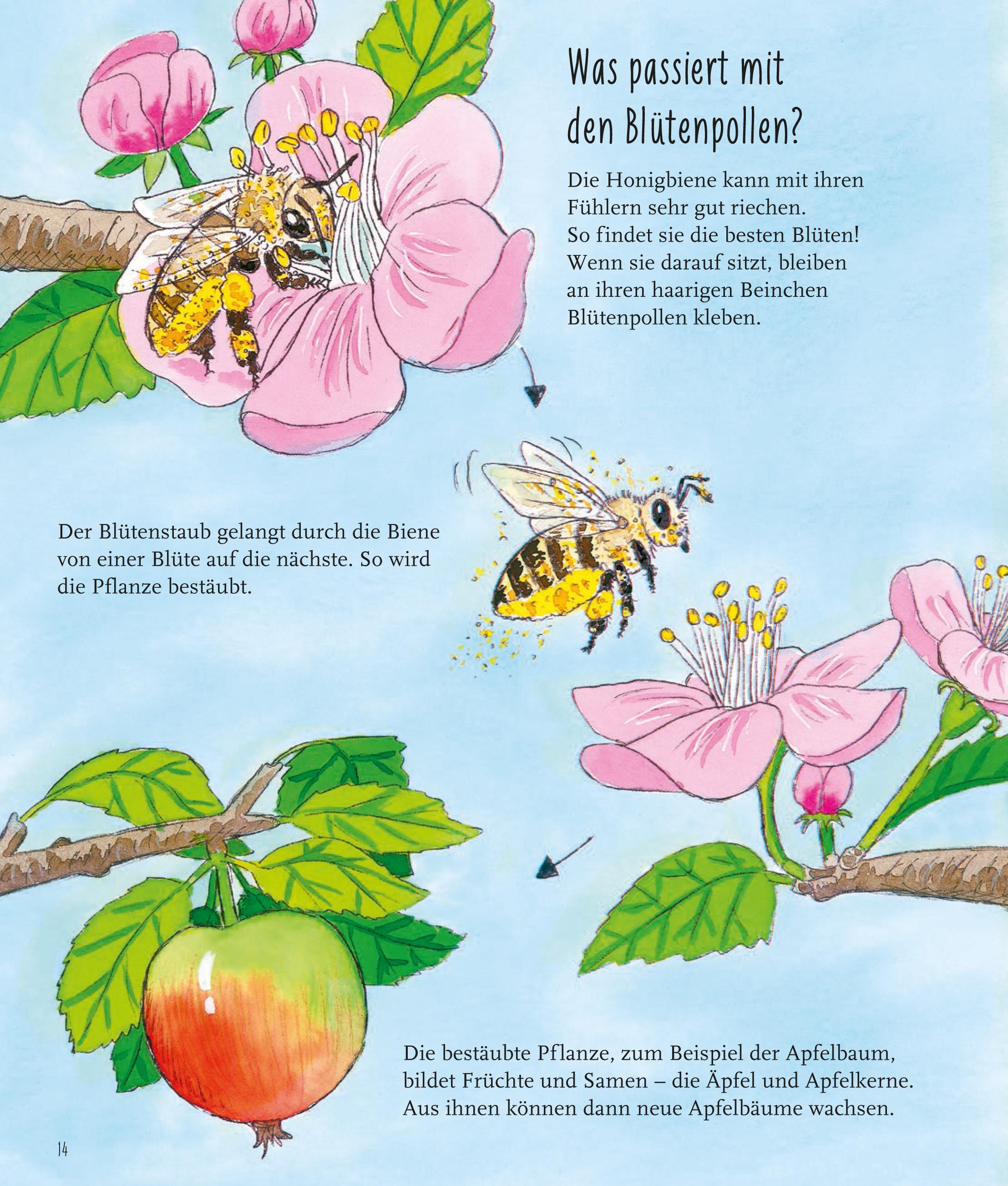 Bienen-14.jpg