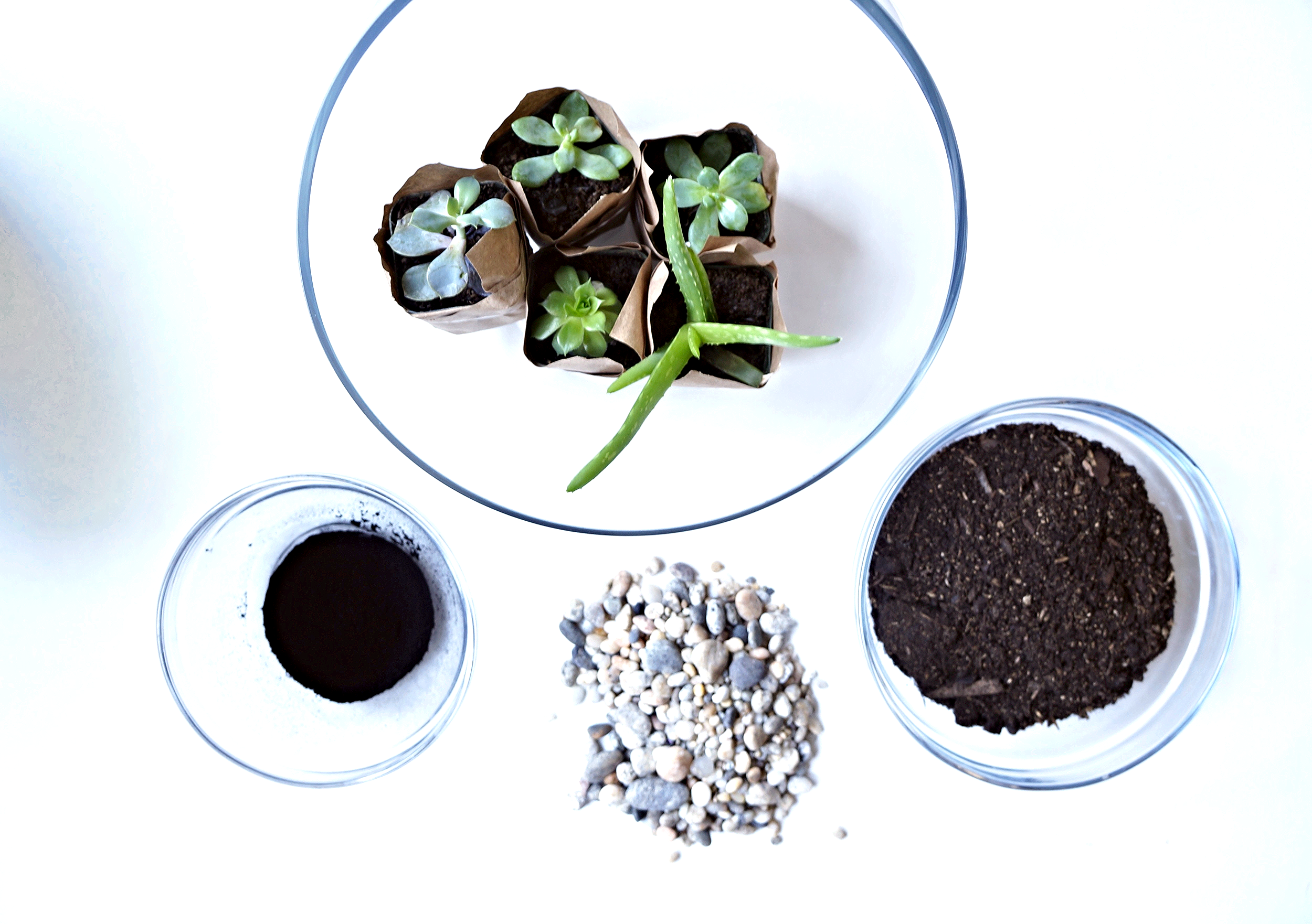 clockwise from top: terrarium container, succulents, potting soil, rocks, activated charcoal powder