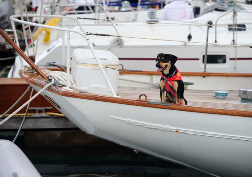 dog on boat Royal BVI YC.jpg