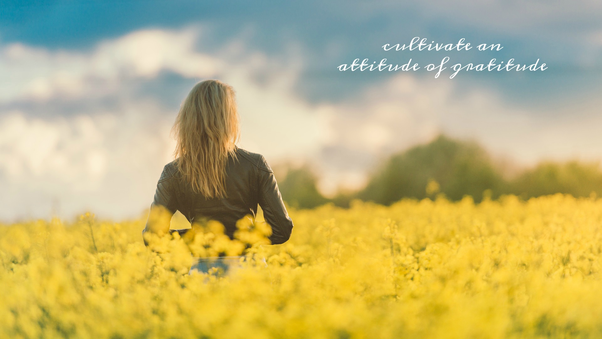 Cultivate an Attitude of Gratitude. Desktop wallpaper to download for free. Circle of Daydreams. www.circleofdaydreams.com