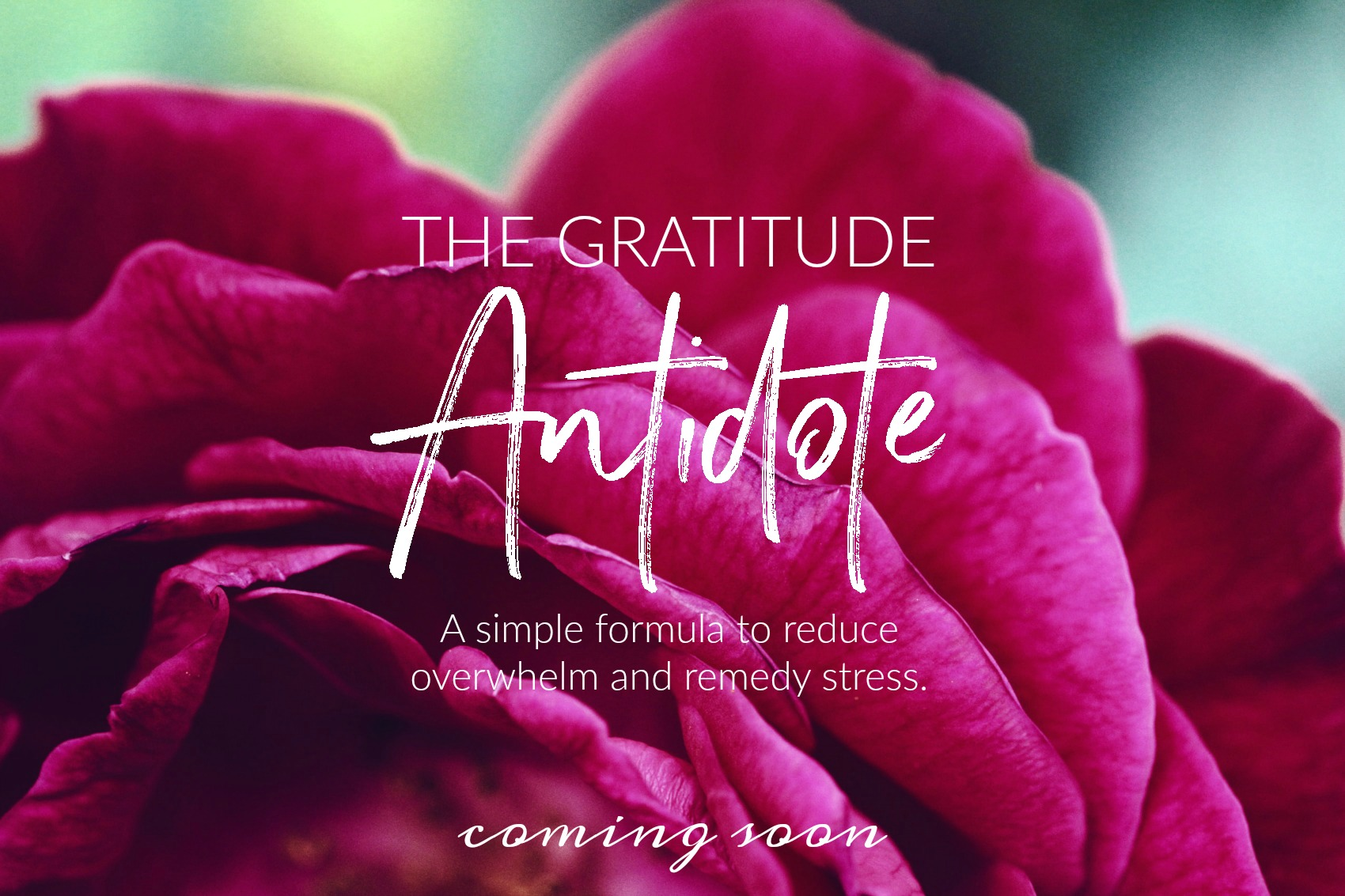 The Gratitude Antidote - coming soon to Circle of Daydreams. www.circleofdaydreams.com