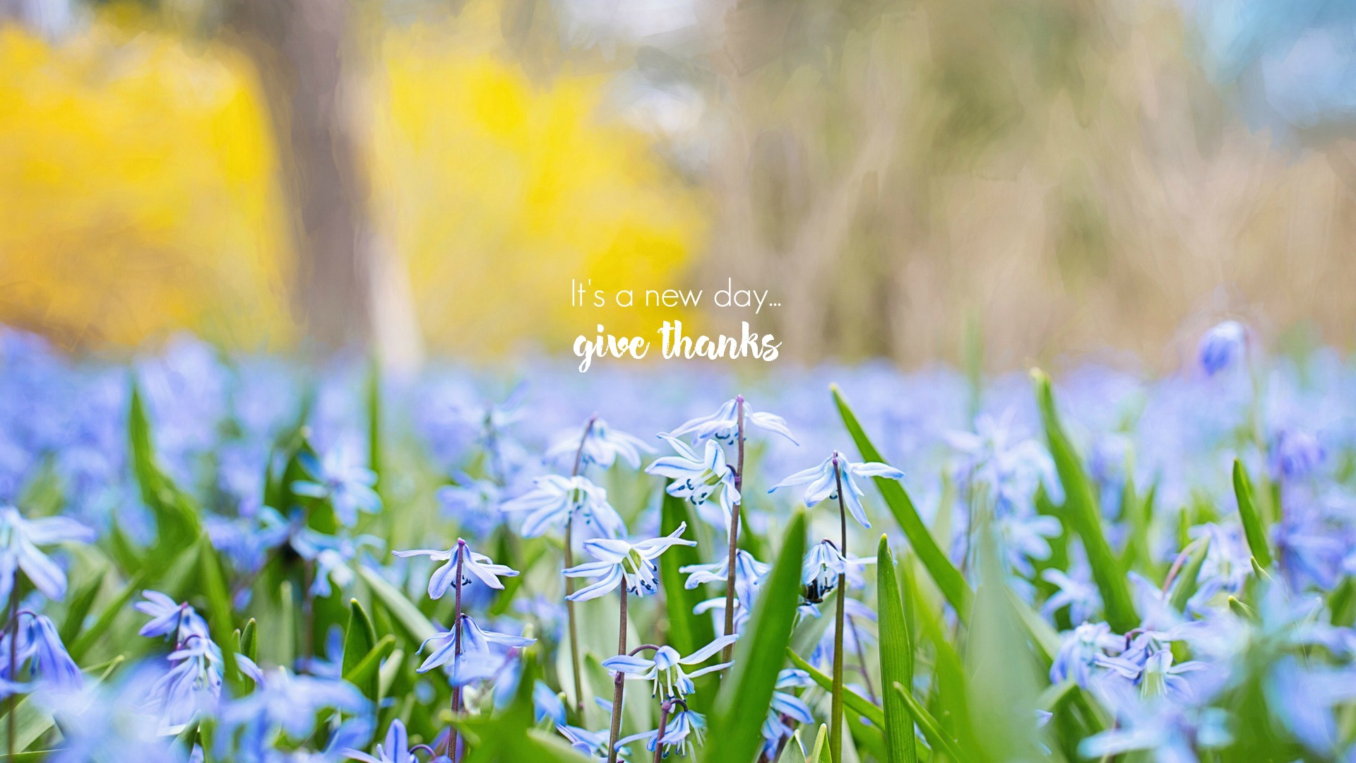 It's a new day - give thanks. A desktop gratitude wallpaper from The Garden of Gratitude. Circle of Daydreams. www.circleofdaydreams.com