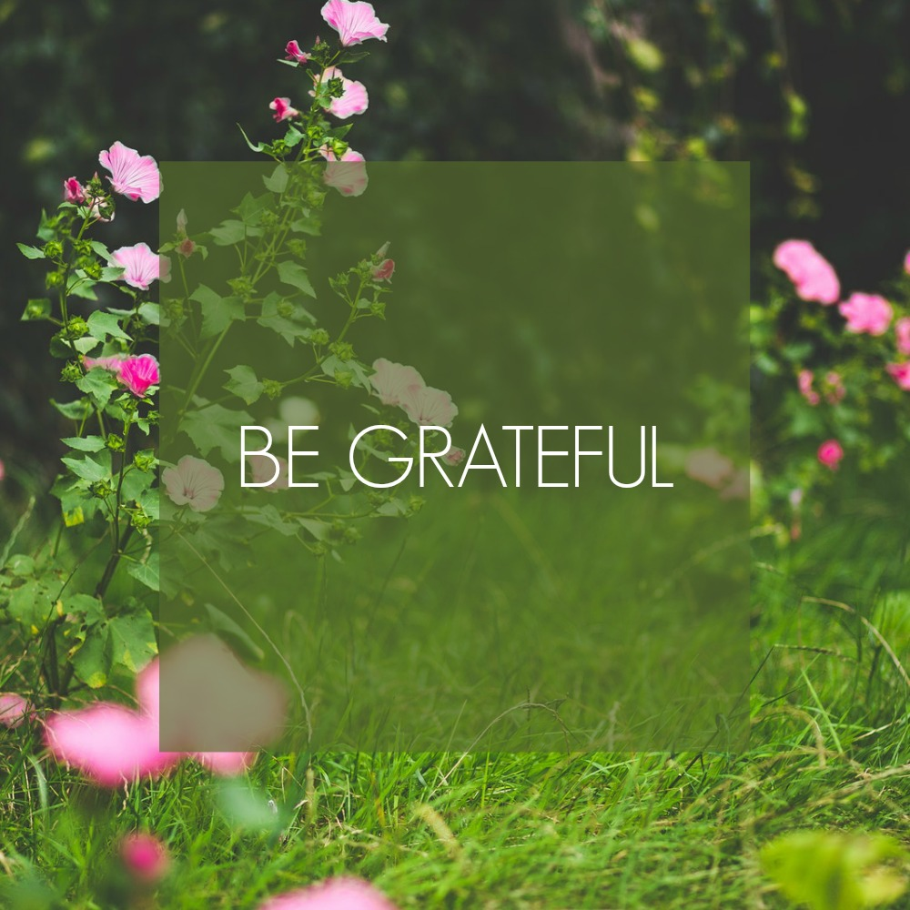 Be grateful. The serenity of giving thanks for what you have, while striving for more is a lovely juxtaposition.