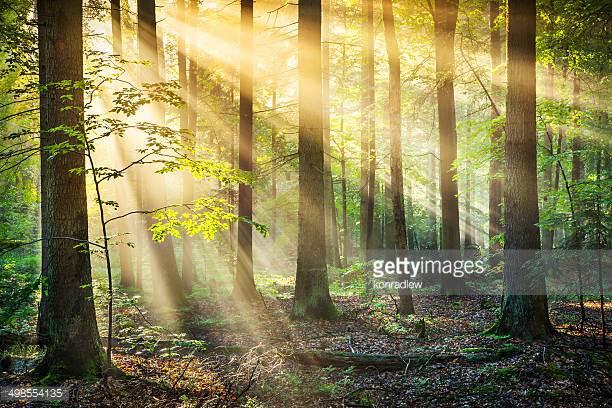 Photo by konradlew/iStock / Getty Images