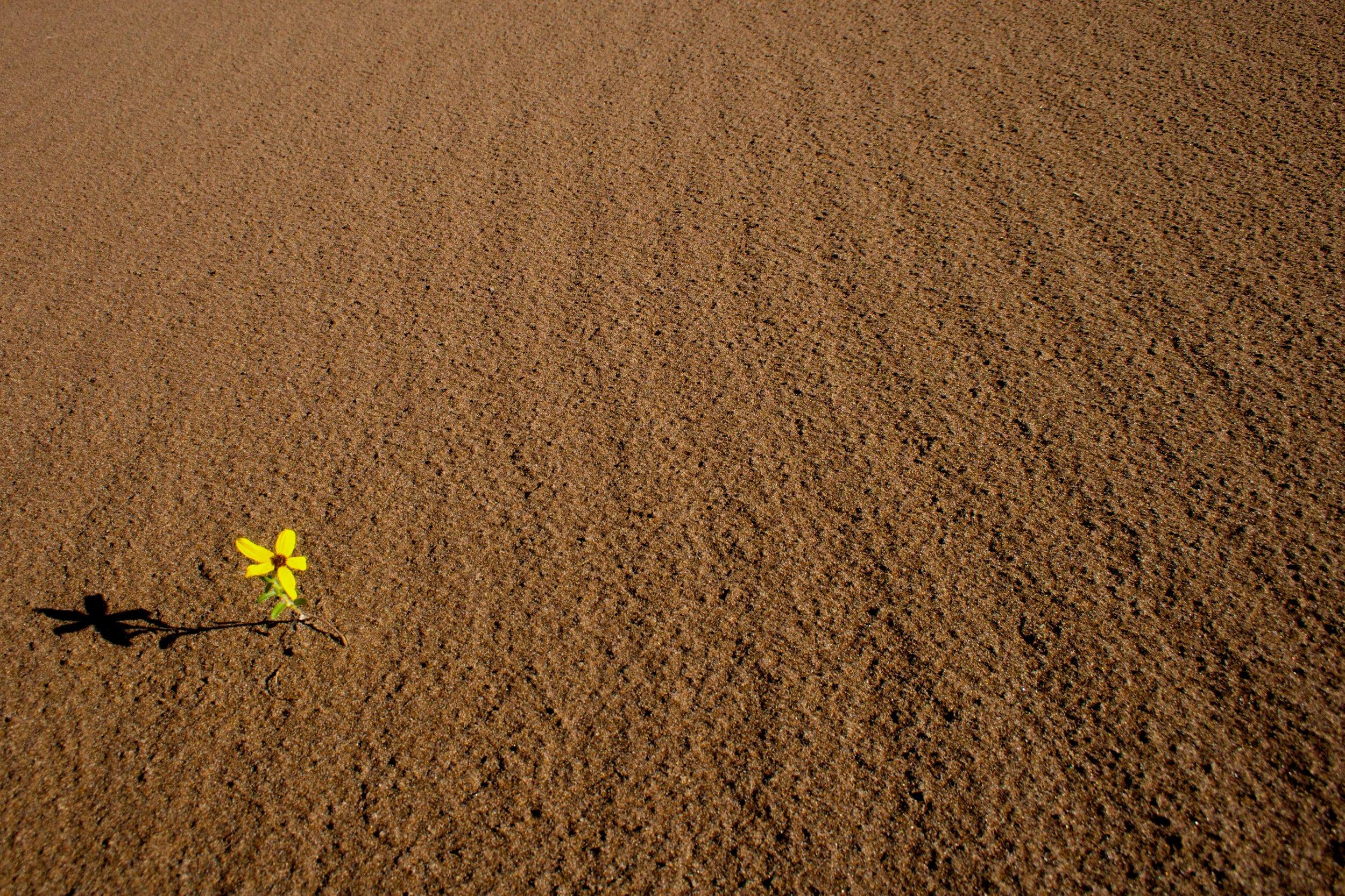 Dune Flower