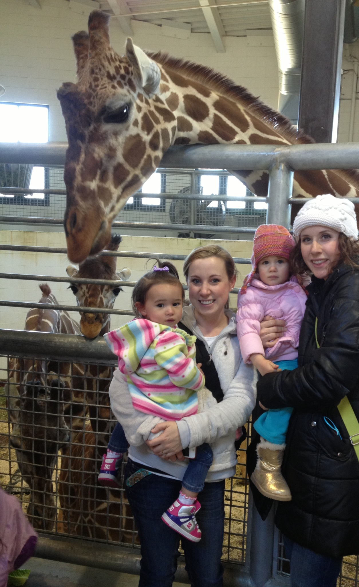 hanging out in the giraffe barn. 3 mamas, 3 babies!