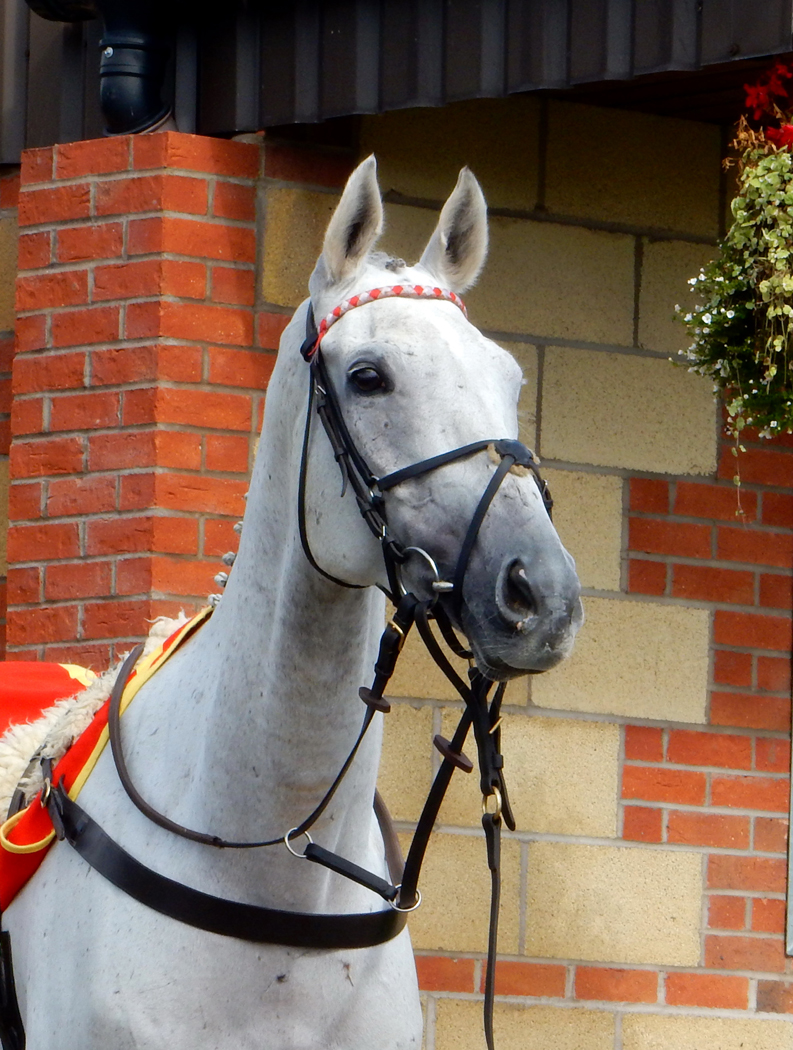 1_Cheltenham Winner_Margaret Townley.jpg