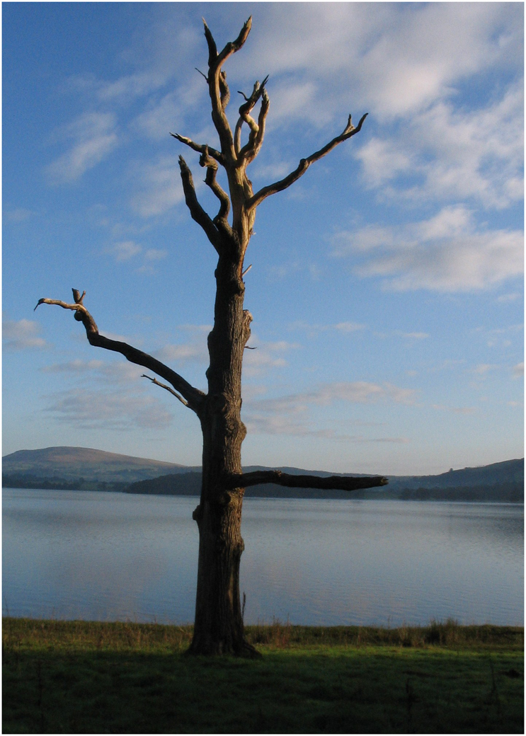 1_The lonesome tree_Margaret Townley.jpg