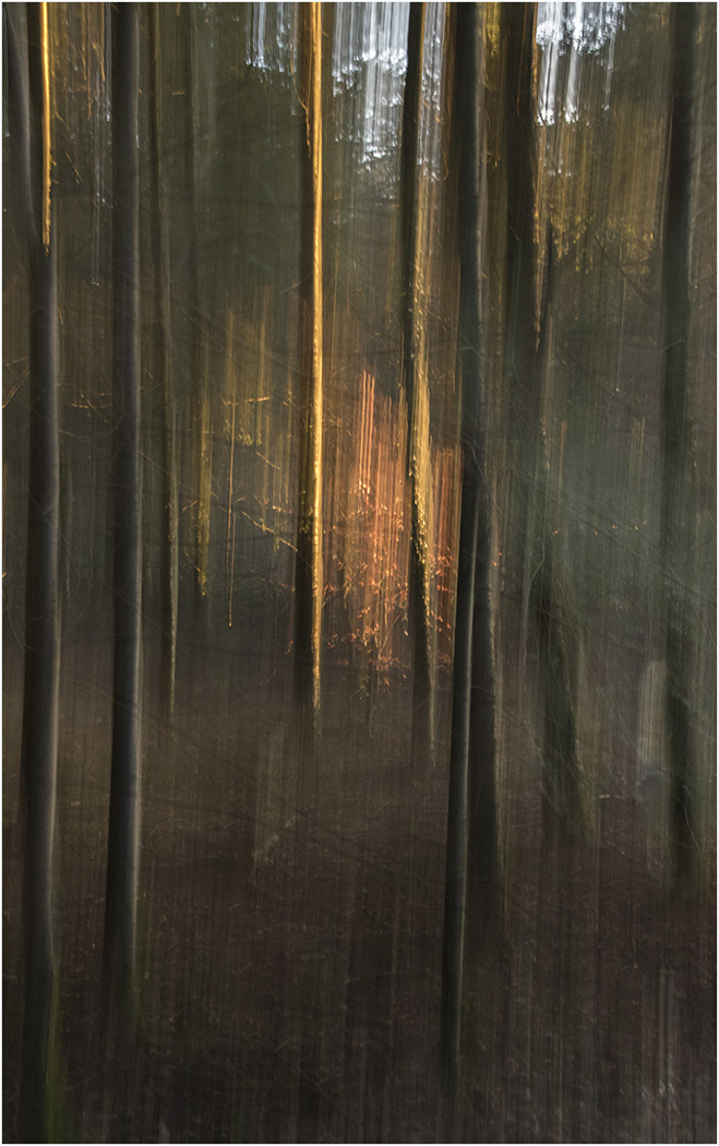 2_Sunrise in the Forest_Dave Hull.jpg