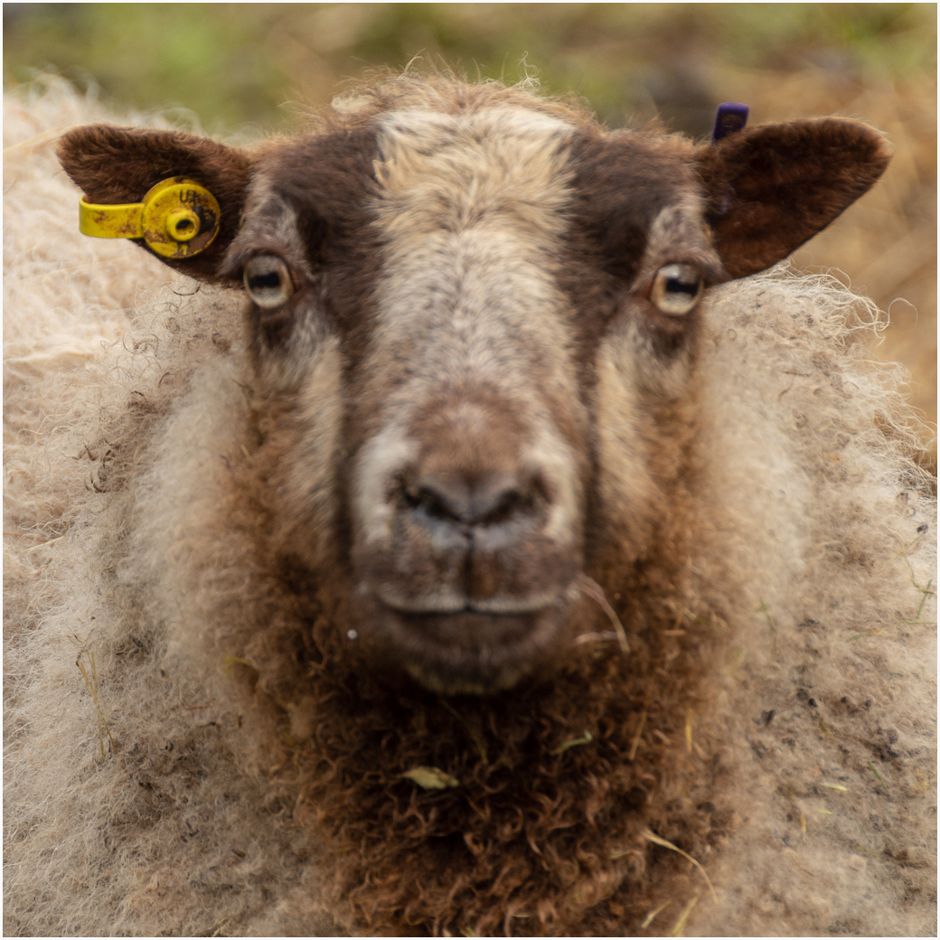 Julian Rouse.   Are Ewe Looking at Me