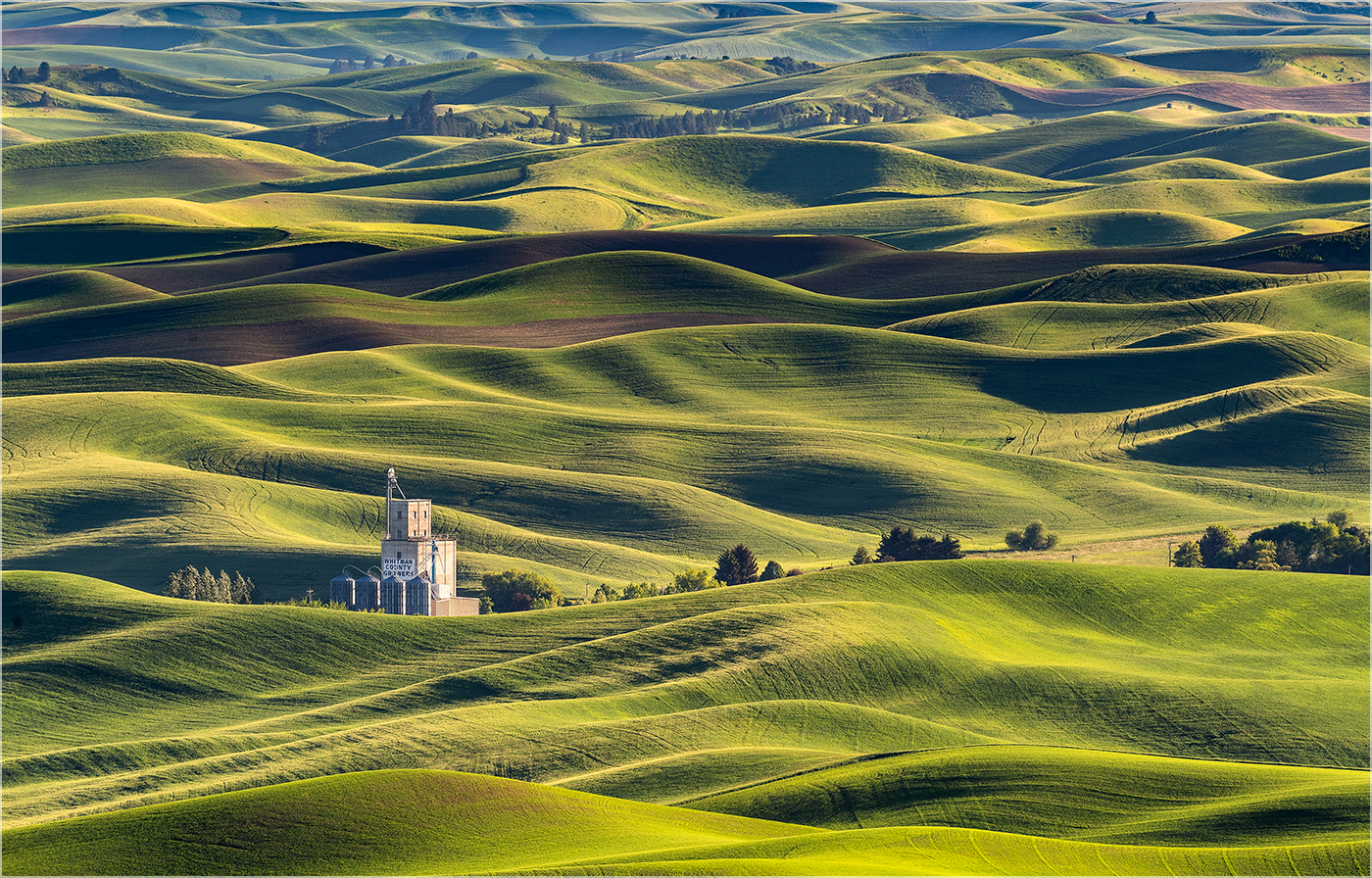 Ric Harding.   A Summer Evening in the Palouse