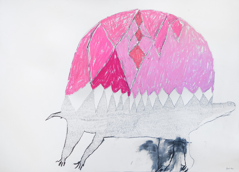 Pink Tortoise  2012 Acrylic and charcoal on cotton canvas 56 x 76cm