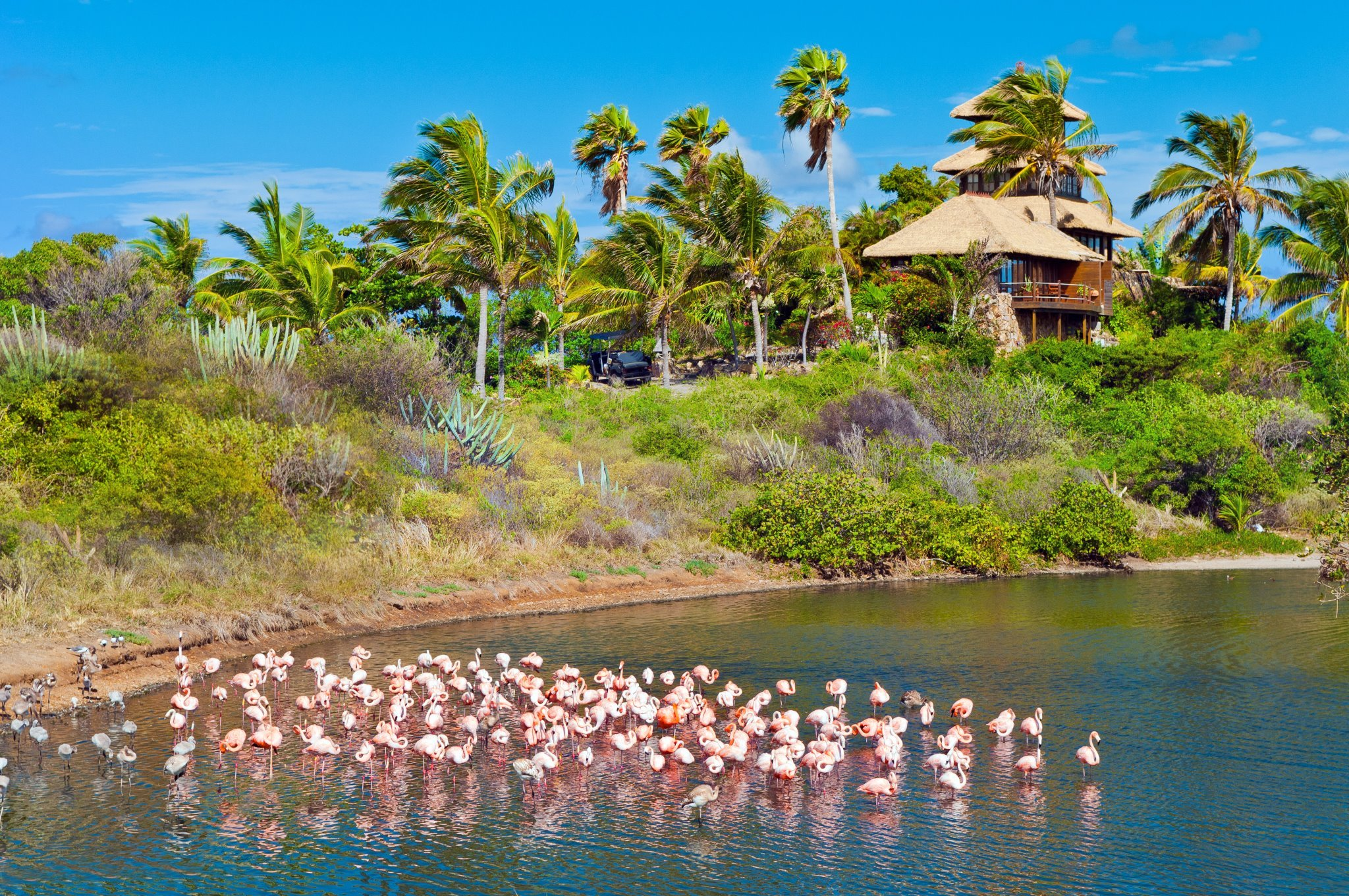 necker_flamingos3.jpg