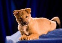 Animal Planet's Puppy Bowl V