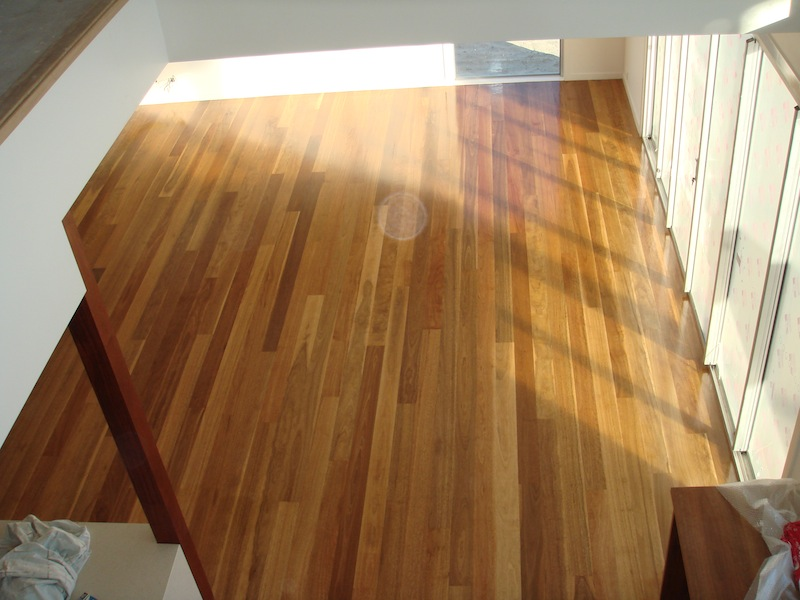 Spotted Gum 2.jpg