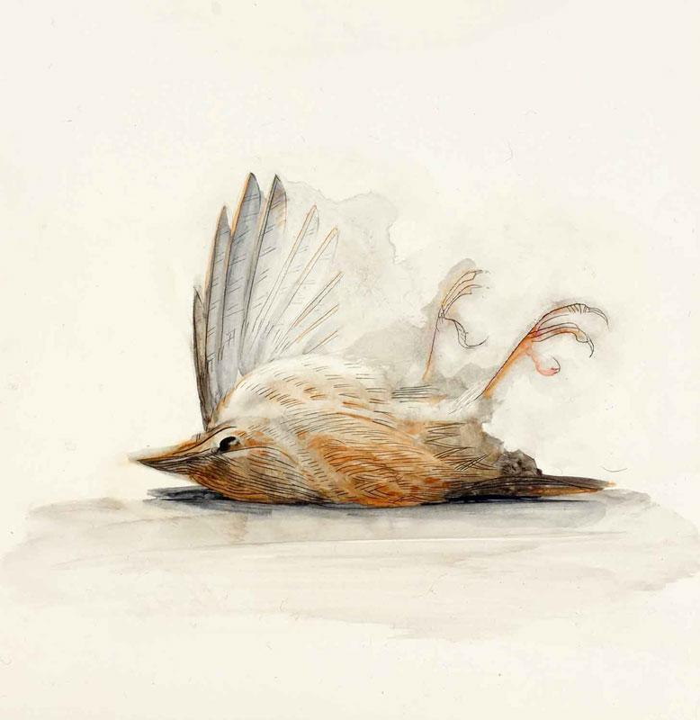 birds-wren-dead.jpg