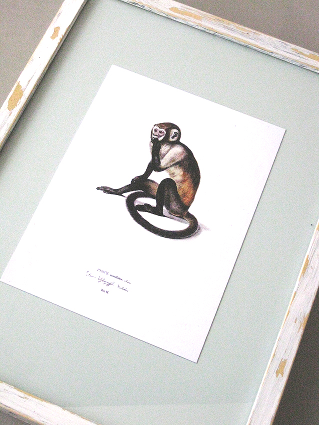 Natural history art print with monkey