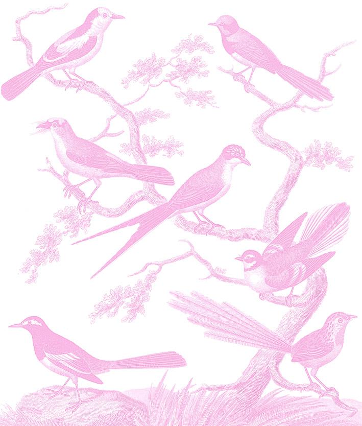 Estampado de pajaros en rosa.jpg