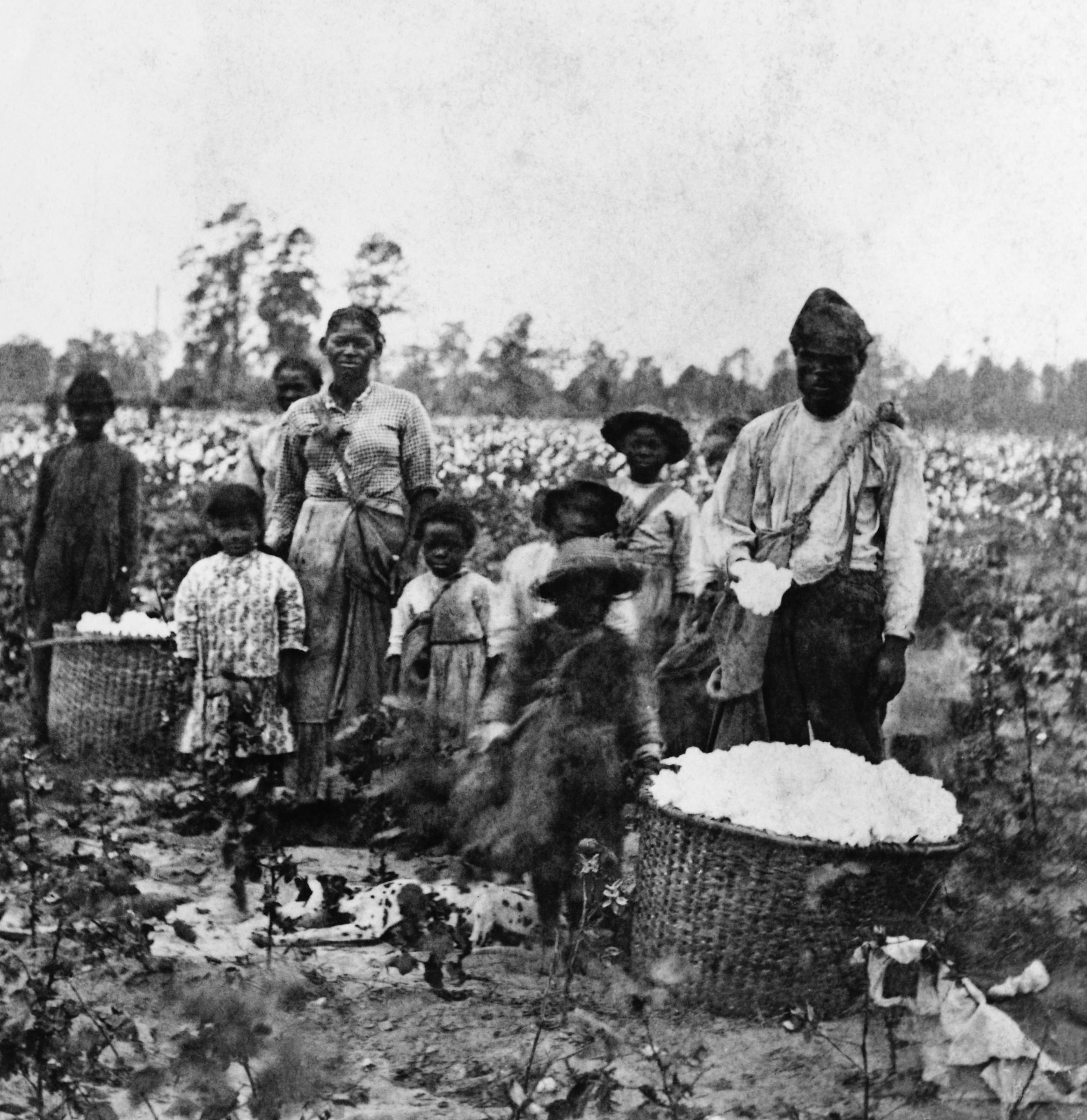 Mustia amerikkalaisorjia Savannah'n puuvillapelloilla, Georgiassa 1860-luvulla.Kuva:  History.com
