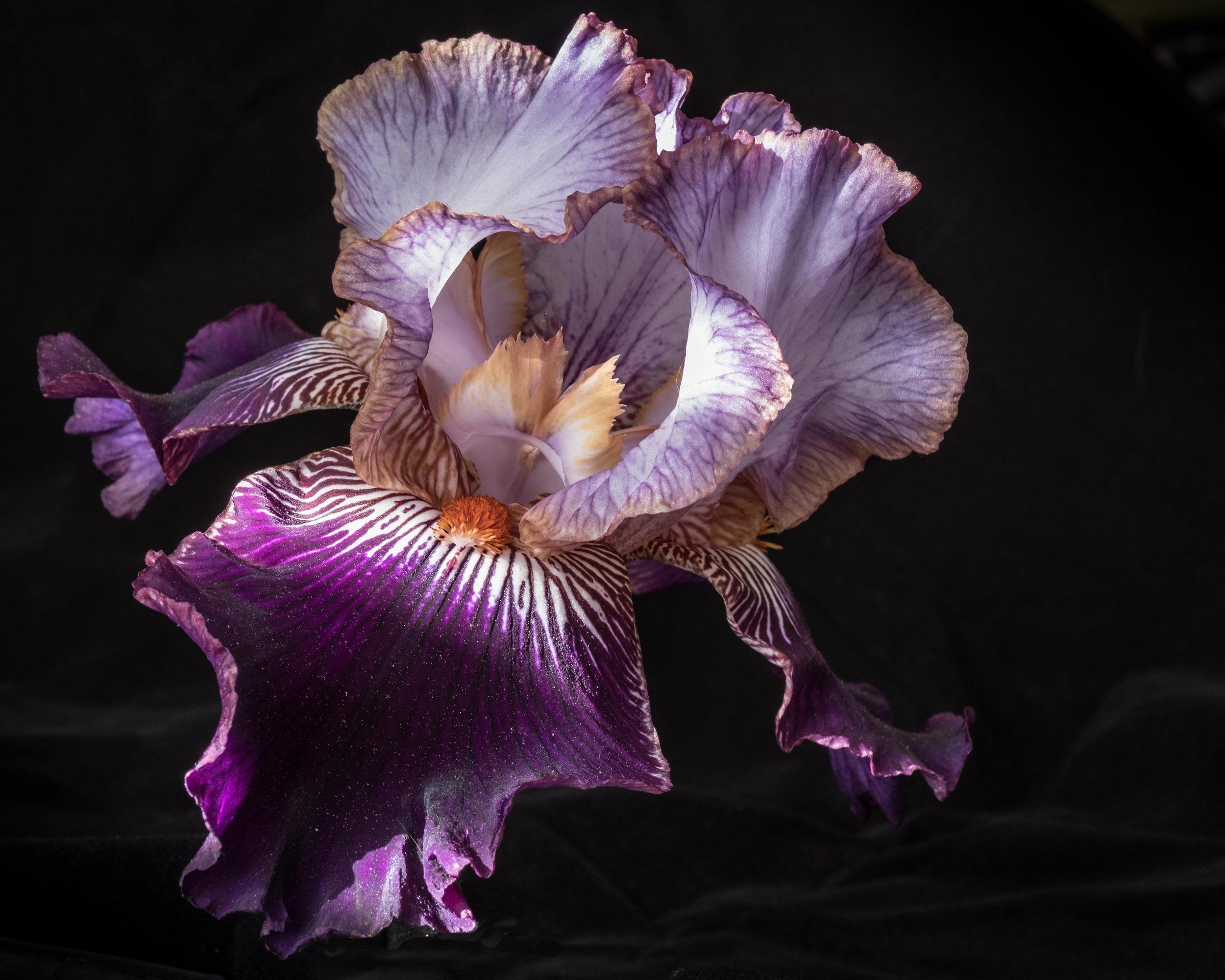 purple flower (2).jpg