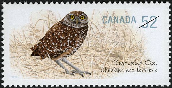 burrowing-owl-canada-stamp.jpg