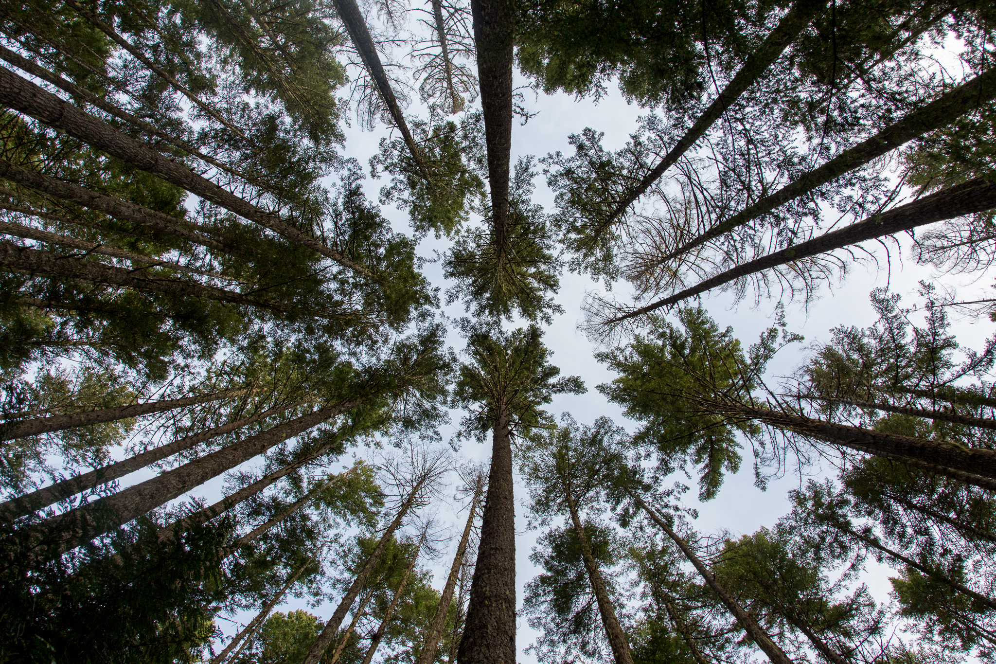 An image of trees in Olympic National Park which requires a lot of dynamic range.