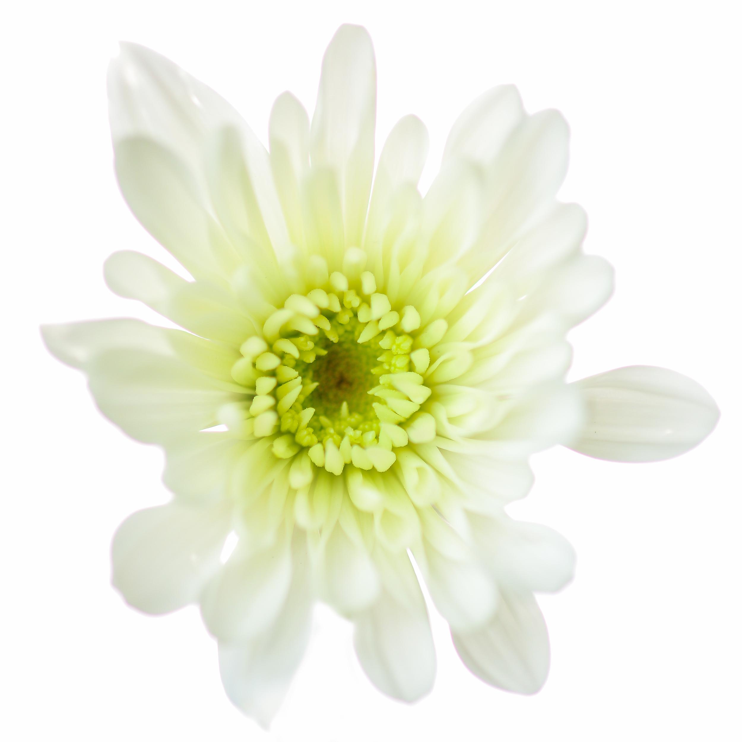 Flowers-100.jpg